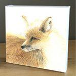 Wyoming Fox