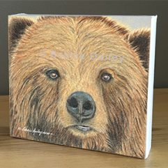 Bear Face – Art Print